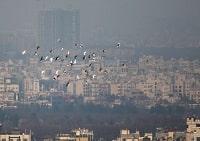 ضرورت مشارکت و همکاری همگانی برای کاهش آلودگی هوا